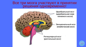 tri-mozga